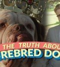 d6e60ec3a4efa6a6be6b43c9de0eccac-the-bizarre-truth-about-purebred-dogs-or-why-mutts-are-better